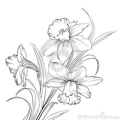 Narcissus tattoo ideas... many images at this page http://imgkid.com/narcissus-flower-drawing-tattoo.shtml