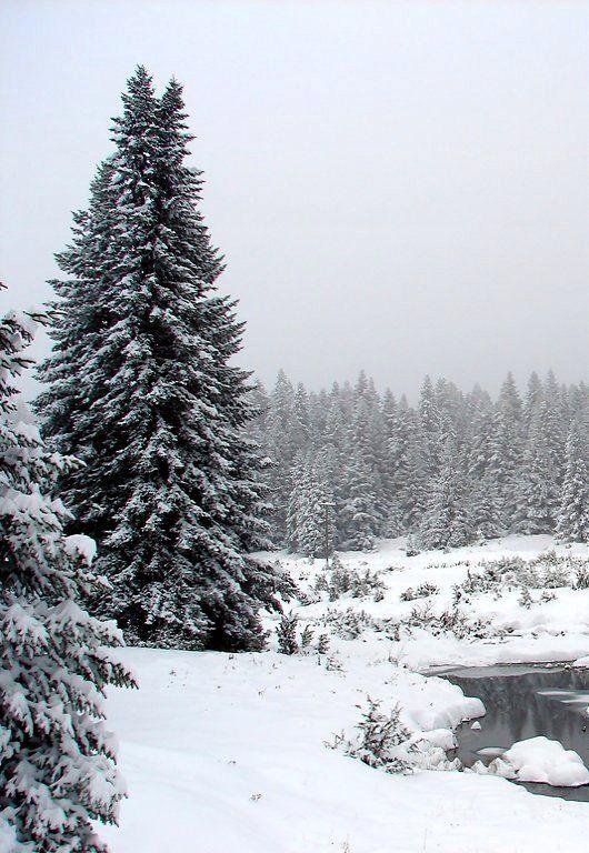 Winter in Pertouli, Pindos mountain Greece | by volos
