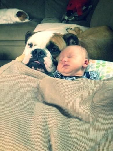 New Baby and a New Friend. Bulldog cuddles with baby. Such a cute dog.