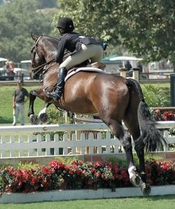 222 Best Images About Horse Training And Obstacle Course