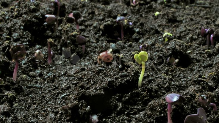 growing seeds sideview close - Stock Footage | by nataq