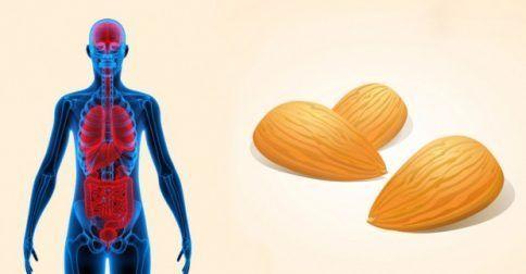 Αυτό θα συμβεί στο σώμα σας αν τρώτε 12 αμύγδαλα κάθε μέρα.