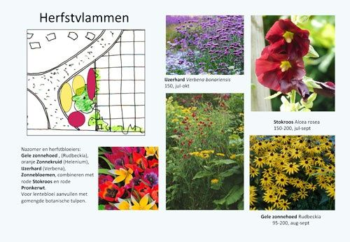 herfstbloeiers voor tuin zuid-westen