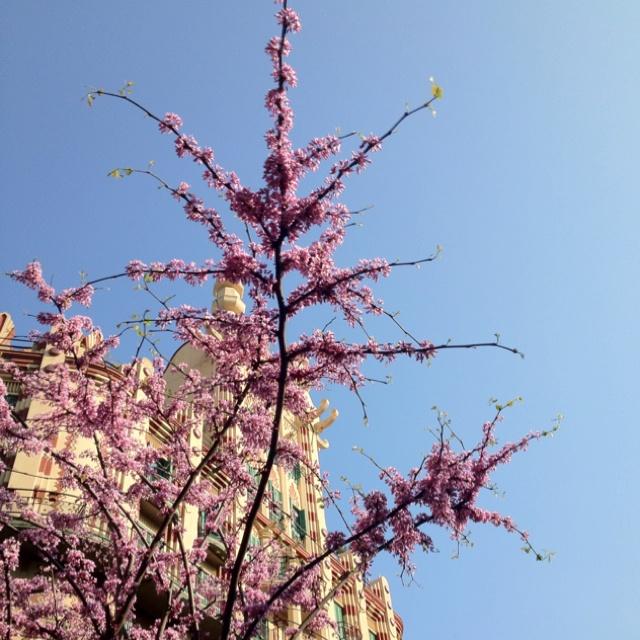 Spring time, Barcelona