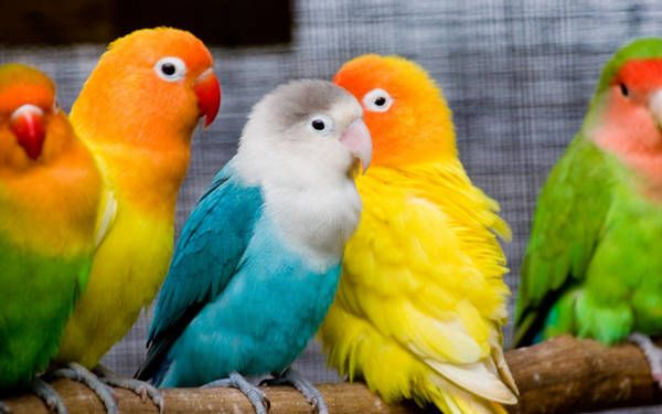Download Bird Wallpaper Parrot Wallpaper Pet Birds Bird Wallpaper