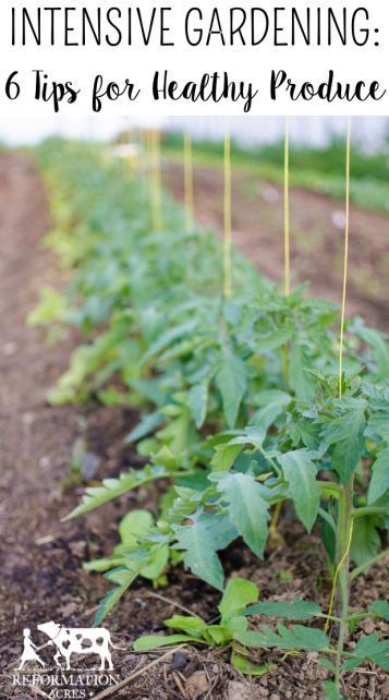 Intensive Gardening: 6 Tips for Healthy Produce