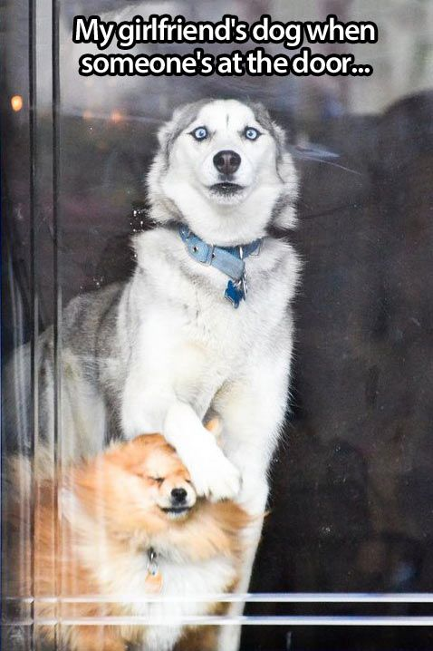 """""""Out of the way, someone is coming!!"""" ~ Dog Shaming Shame - HELLLLO!"""
