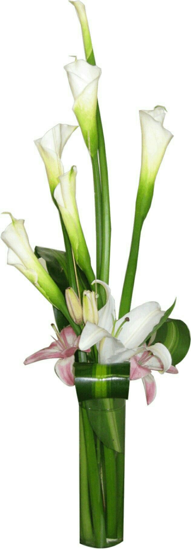 best calla lilies images on pinterest calla lilies calla lily