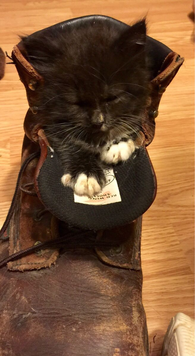 20 Cats Falling Asleep in Strange Places | PawPost