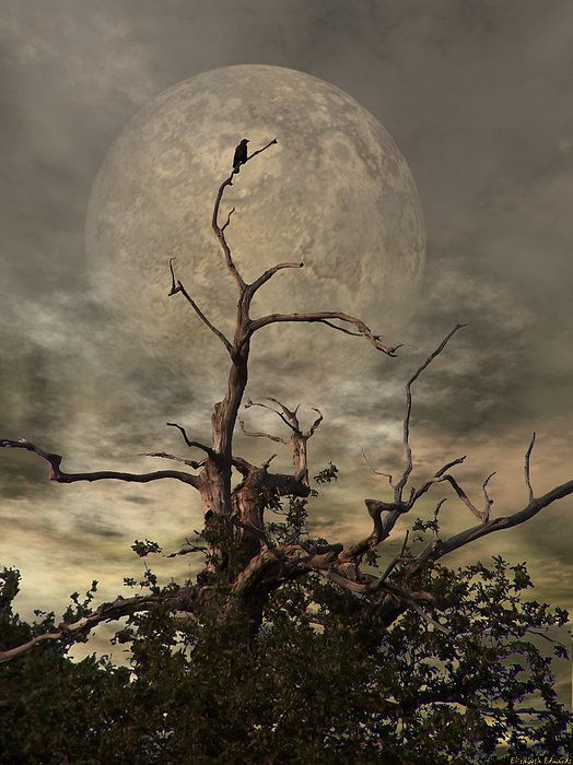 Moon & Crow Tree..what does this mean?? Read Oracle to find out.. To be released soon ;-) Fall 2013
