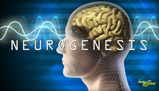 So much for cannabis killing brain cells... New study finds that CBD causes neurogenesis in the brain.