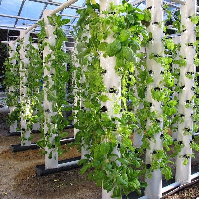Introducing our aeroponic farming system..now everybody can pick thier veggies and bring it to the chef..come and try it yourself  #arumdalu #eco #luxury #resort #belitung #island #indonesia #wonderfulindonesia #destinasian #placetogo #nature #farm #tourism #green #organic #foodporn #travelgram #holiday #bestvacations #travelblog