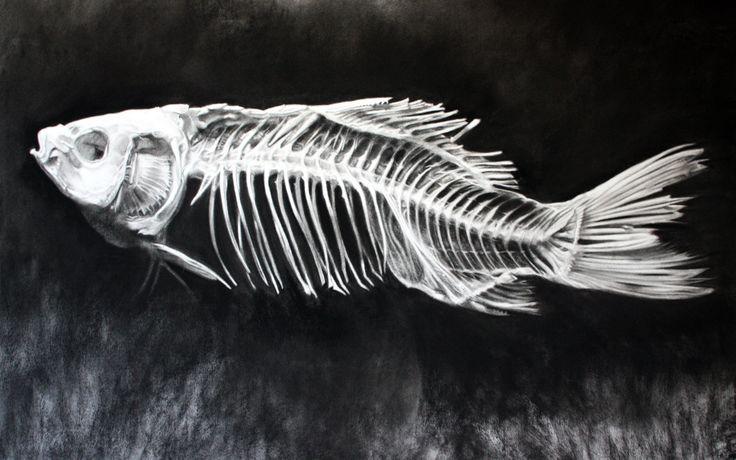 Kell Black, Fish Skeleton, Charcoal on paper