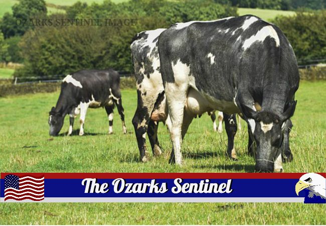 Youths interested in dairy industry can register for 4-H program | The Ozarks Sentinel