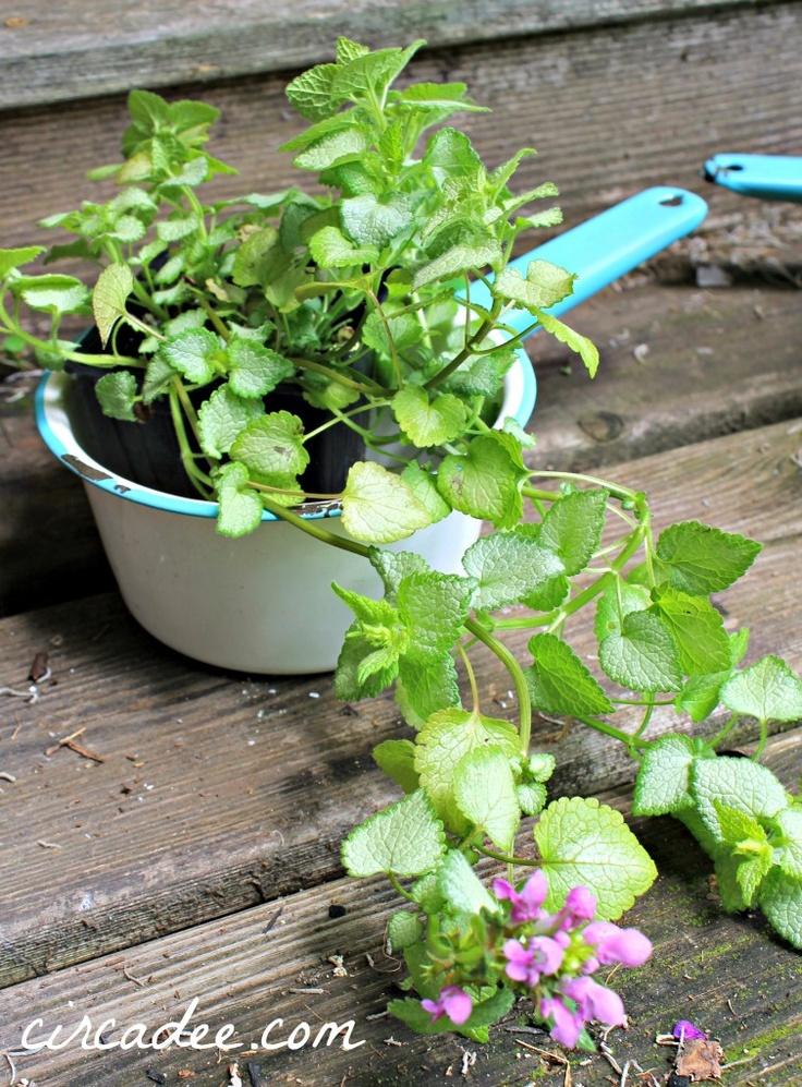 enamel pot plant pot