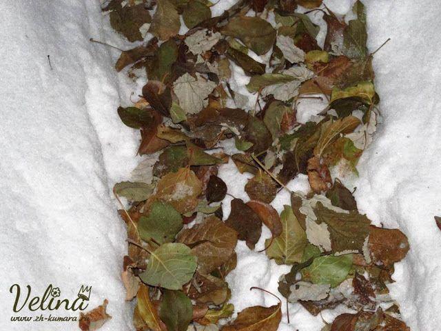 снег зеленые деревья