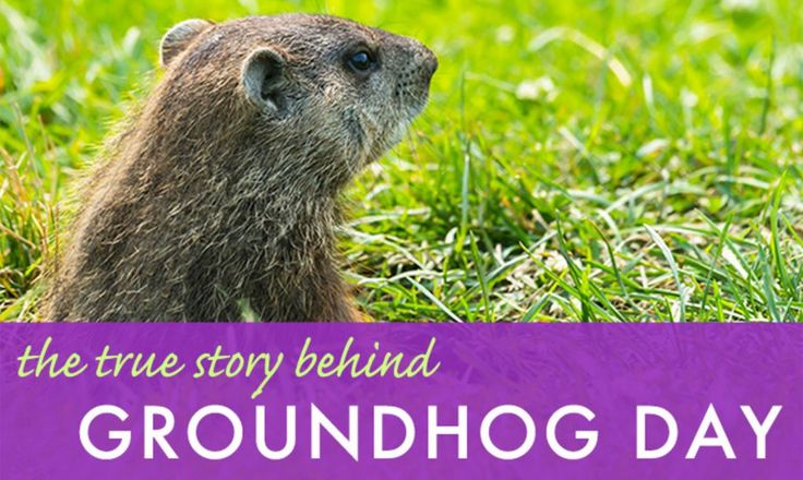 The True Story Behind Groundhog Day lead big