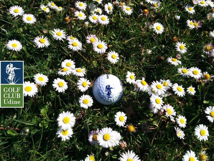 Spring - Golf Club Udine, Fagagna - Udine, Italy