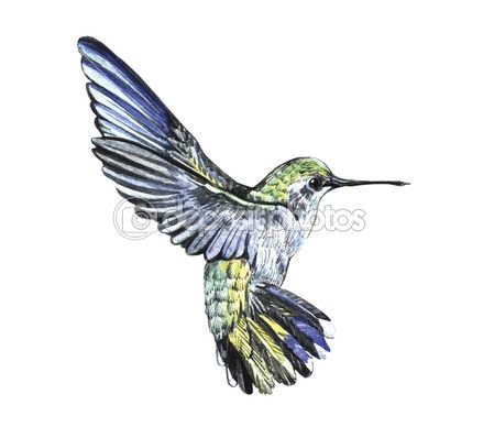 колибри рисунок - Поиск в Google