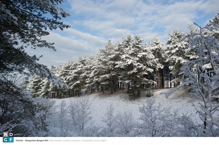 Picture: Rob Donders | Location: Bergen (NH.) - The Netherlands - Bergerbos in de sneeuw