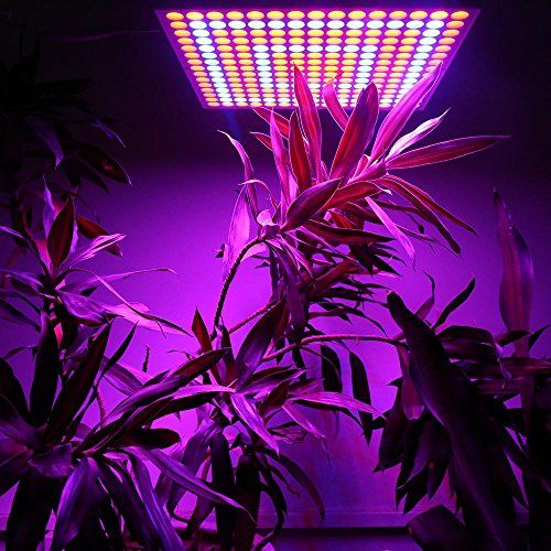 eSavebulbs 65W LED Grow Light Red Blue Led Light Hanging Panel for Indoor Garden Greenhouse Plants AC 85V265V Review https://ledgrowlightsusa.info/esavebulbs-65w-led-grow-light-red-blue-led-light-hanging-panel-for-indoor-garden-greenhouse-plants-ac-85v265v-review/