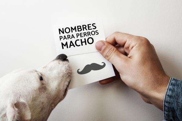 Nombres de perros machos - ¡Más de 900 ideas!