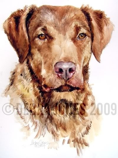 Dog-a-day Art Blog: Chesapeake Bay Retriever