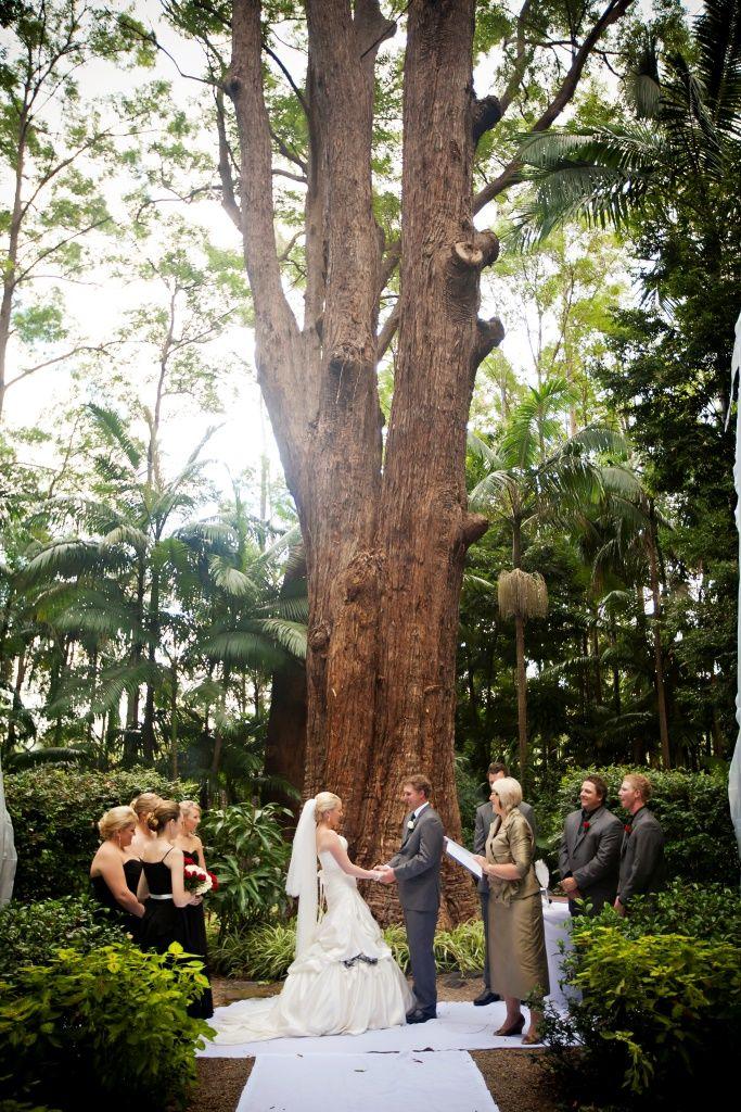 The enchanting rainforest