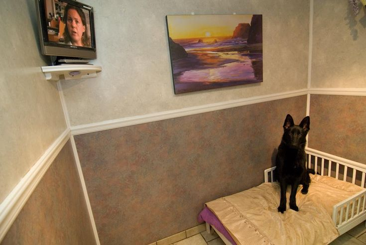Dog Kennels   Briggita In Our Luxury Dog Suite « Calypso Boarding Kennels for Dogs ...
