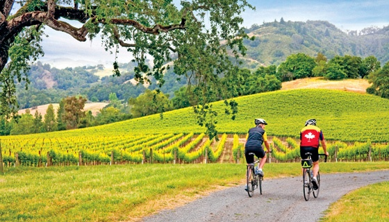 Wine Country Bike Tours #JetsetterCurator