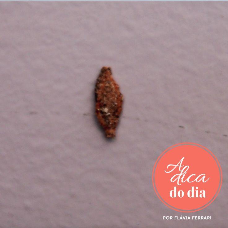 Esta é a traça de roupasque se transforma em mariposa depois de uma metamorfose…