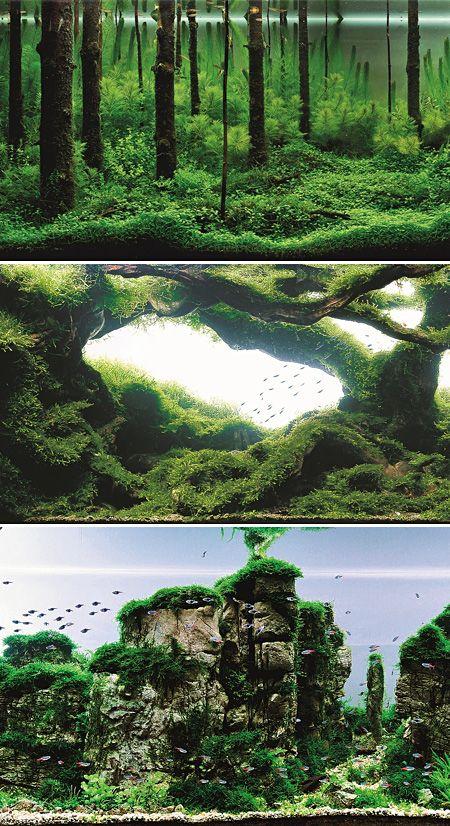 Definitivamente só aquario top!