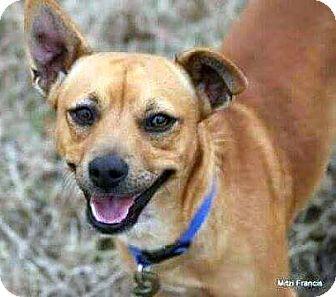 Terrier (Unknown Type, Medium) Mix Dog for adoption in Rockaway, New Jersey - Texarkana Texas