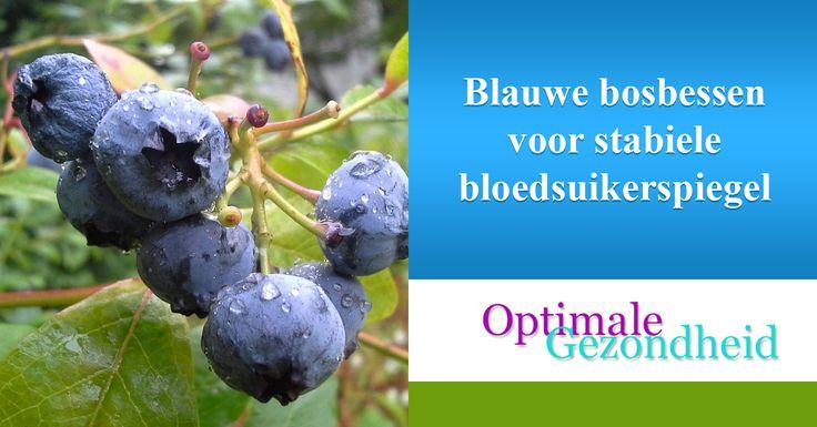 Blauwe bosbessen voor stabiele bloedsuikerspiegelVeel Hollandser kan het niet: Blauwe Bosbessen. Maar als je denkt dat deze alleen in Nederland groeien, heb je het mis. Je kunt ze overal vinden, met name op de plaatsen met een gematigd klimaat.Bosbessen zorgen niet alleen voor blauwe lippen en zijn niet alleen