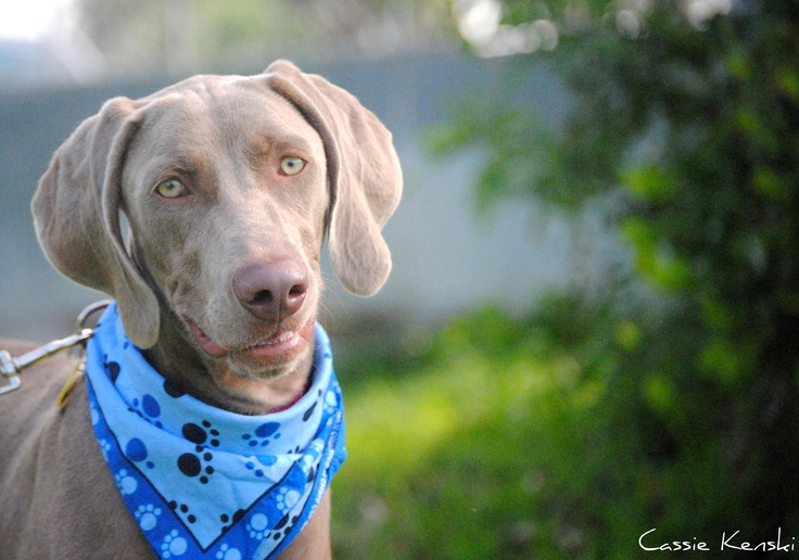 Big Dog Ranch Rescue Dogs Ready For Adoption