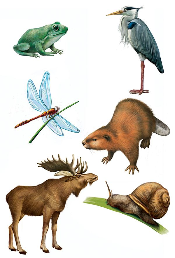 """Illustrations for the russian publishing house """"Azbookvaric"""" to the children encyclopedia """"Seasons of the year in the forest"""".It is not big book: 5 landscape-pictures of the forest in different seasons of the year and differenrt time of a dayand 5 pictu…"""