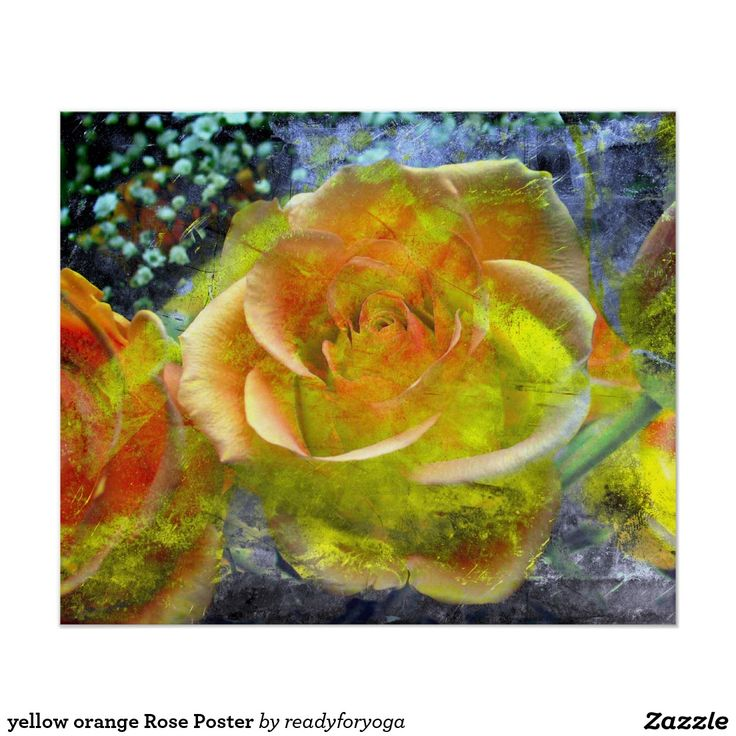 yellow orange Rose Poster
