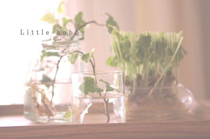 無印良品の木製角型トレー一番小さいサイズを買いました水耕栽培ののまとめて瓶などを並べました手前の小さい花瓶は100均です※PR欄※テレビ番組で大反響!大幅...