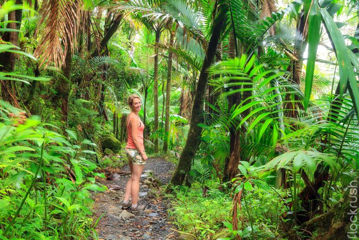 Hiking in the beautiful jungle of the El Yunque national forest in Puerto Rico. #jungle #travel #nature #flockrush