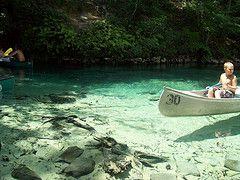 41 Best Econfina Creek River Spring Images On