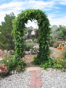 HOPS ARBOR......totally back yard material thats functional, at least at my house!