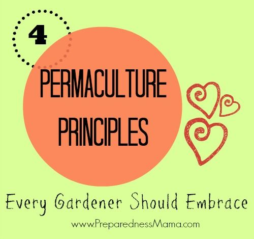4 Permaculture Principles Every Gardener Should Embrace  - By Shelle | February 14, 2014 | Gardening  These  Permaculture Principles will get...