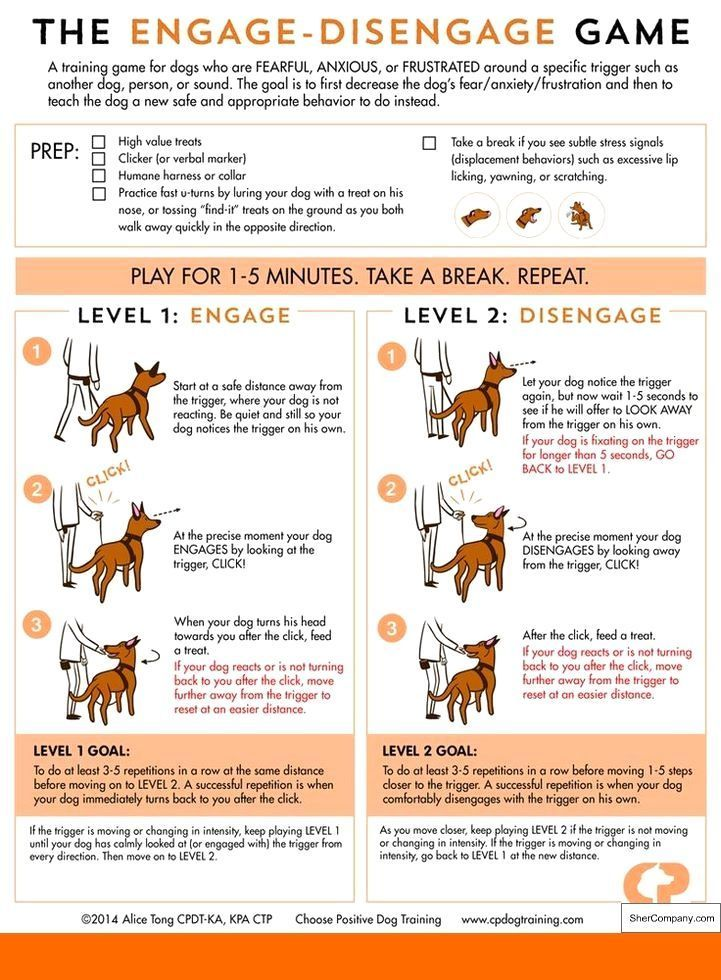 Basic Obedience Training For Dogs Help Is Here Reactive Dog