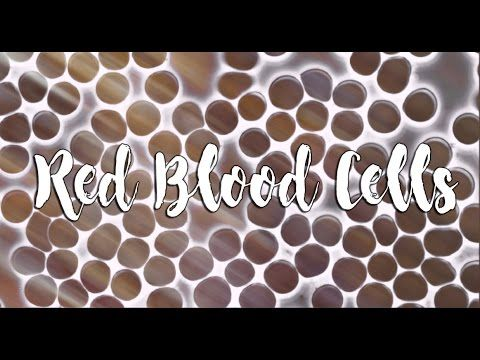 You Health: Red Blood Cells