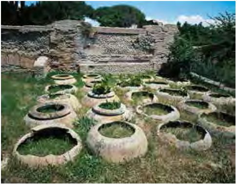 L'olivo e l'olio, da sempre simboli di abbondanza, di benessere e di pace.