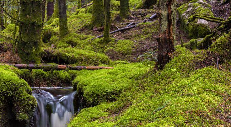 Forest Flow by Eirik Sørstrømmen on 500px