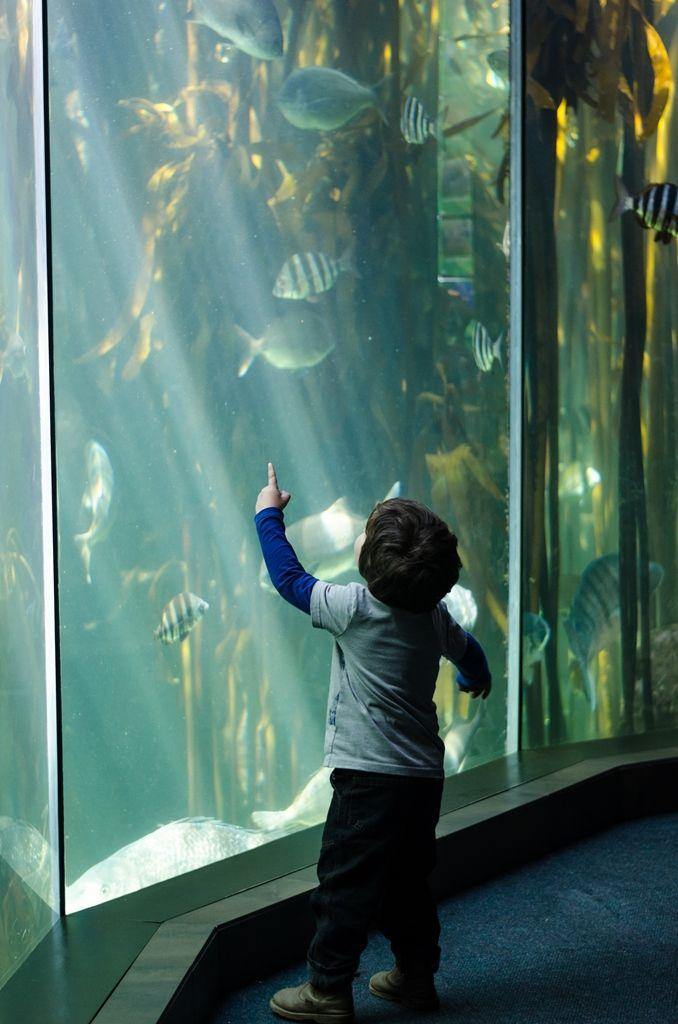 Two Oceans Aquarium, Cape Town http://www.capetown.travel/attractions/entry/two_oceans_aquarium  #TwoOceansAquarium #TwoOceans #Aquarium #CapeTown #CapeTownAquarium #AquariumCapeTown #lovecapetown #CapeTownAttractions