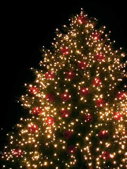 Lovely Neighborhood Christmas Party Ideas Part - 13: Invite Guests To Decorate A Neighborhood Christmas Tree.