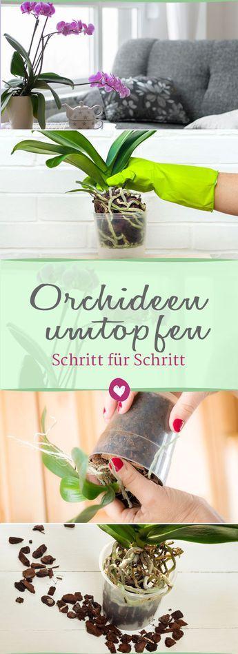 Orchideen umtopfen: Tipps und Tricks, damit die Pflanzen lang leben – Yana Ja