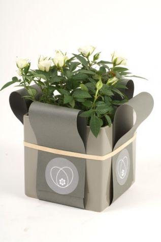 Fiori Present Packaging